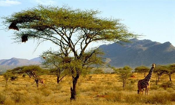 samburu-national-reserve